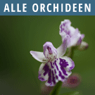 Alle Orchideen